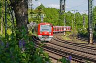 Ein Hamburger S-Bahn-Zug fährt bei Frühlingswetter am Dammtor an blühenden Blumen vorbei