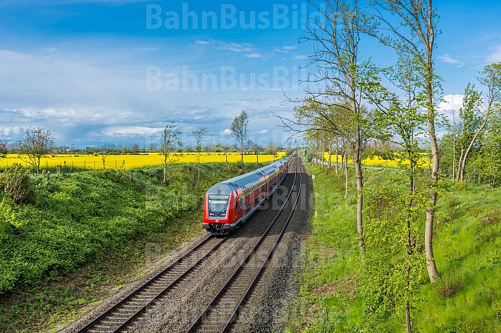 Ein Doppelstock-Regionalzug bei Großenbrode in Schleswig-Holstein vor Rapsfeldern