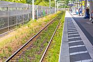 Zugewachsenes Gleis im Bahnhof Hamburg-Rahlstedt